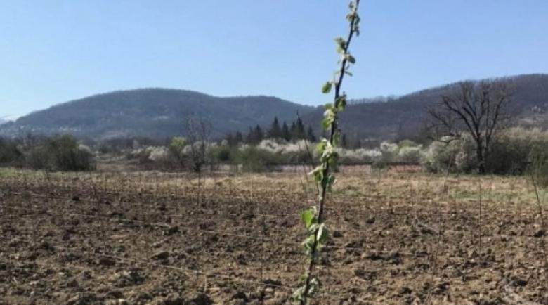 Благоевградчанин нае 18 дка пустееща общинска земя за овощна градина с нарове