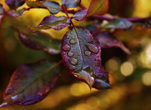 Април започва с дъжд и сняг, чакаме слънце за Цветница