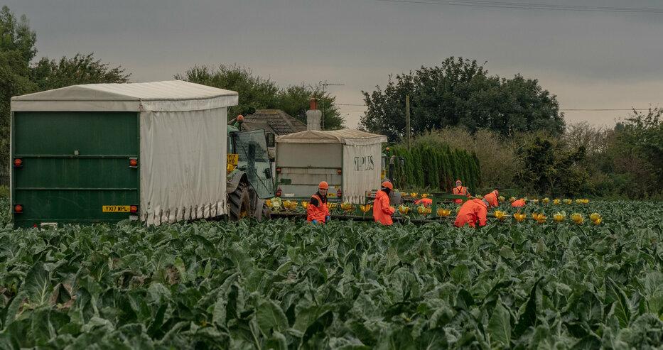 Великобритания спешно търси работници от Източна Европа