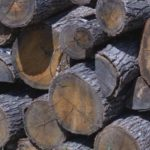 Незаконната сеч носи около 150 млн. лева годишно на бракониерите в България