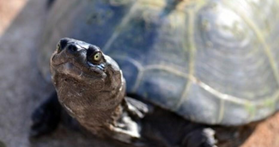 60-годишна бе глобена с 400 евро в Рим, разхождала костенурката си