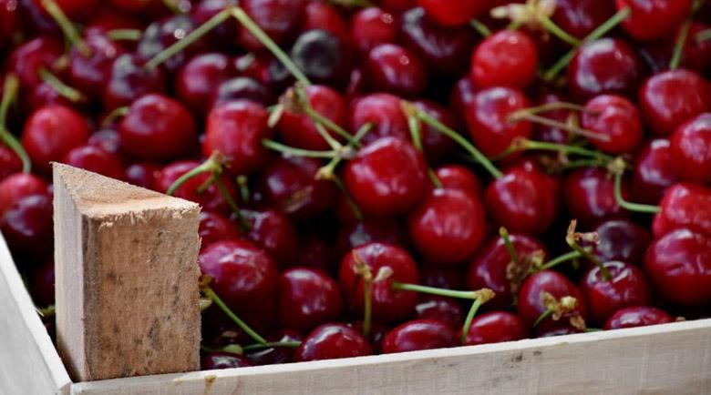 В Кюстендил ще отбележат празника на черешата от 26 до 28 юни