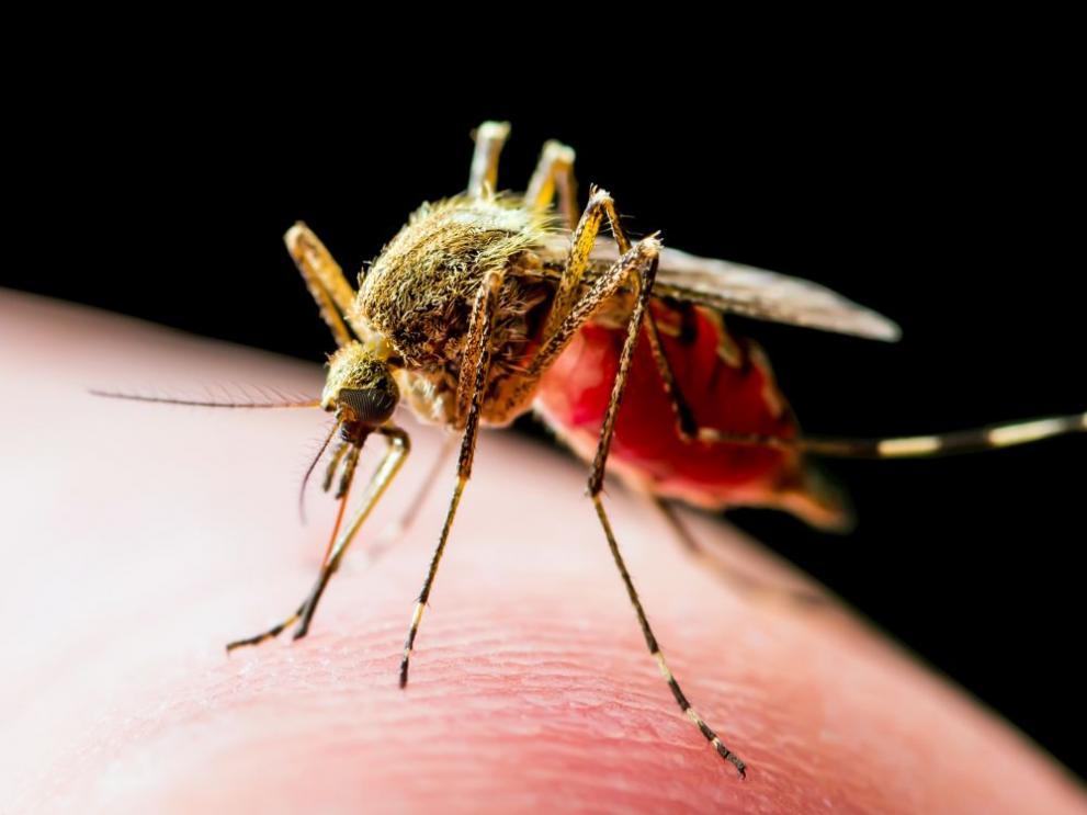 Комарите не могат да пренасят коронавирус