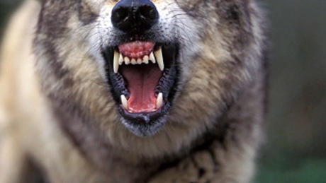 Домашно куче нападна и нахапа зверски момченце в пловдивско село