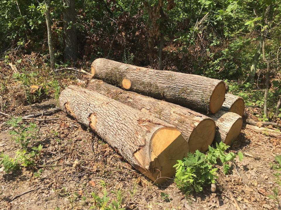 Съвместната проверка на Изпълнителната агенция по горите не откри нарушения в ползването на дървесина в Гоцеделчевско