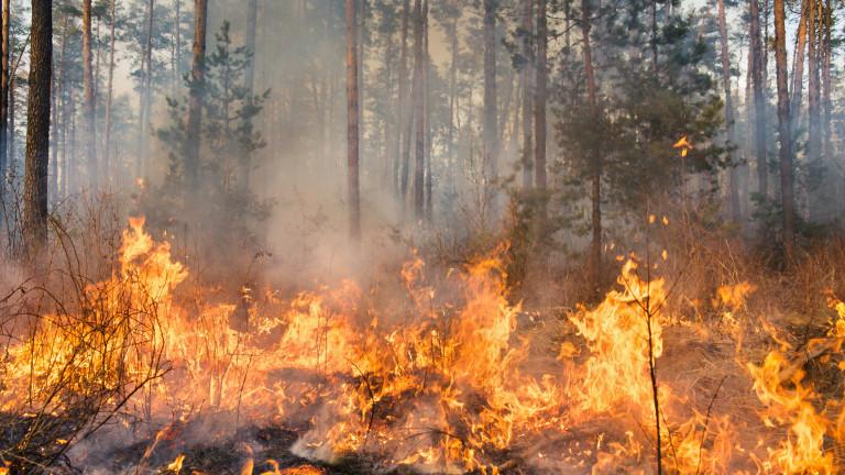 Голям пожар гори крайСандански