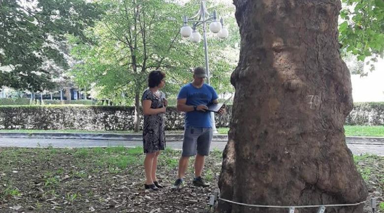 Премахват 25 опасни дървета в центъра на Кюстендил, след като липа едва не уби 2-годишно