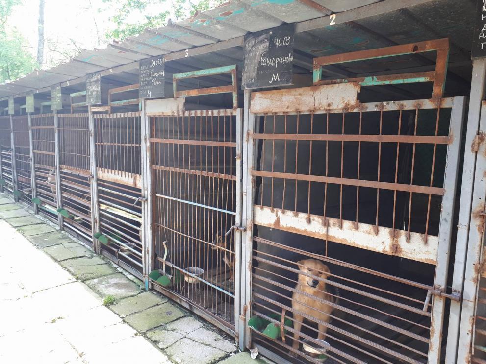 Пълна промяна на приюта за кучета край Дупница