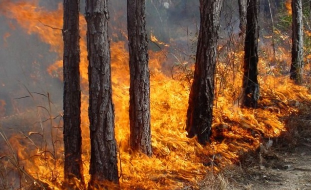 10 000 дка горят в Хасковско