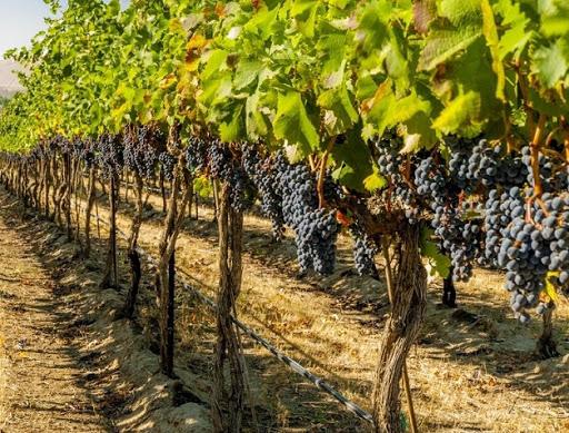 Правителството ще подпомогне с близо 19 милиона лева производителите на плодове, зеленчуци, маслодайна роза и винени лозя