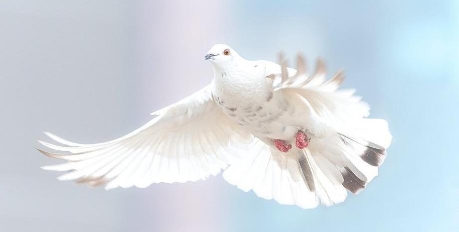 21 септември – Световен ден на мира