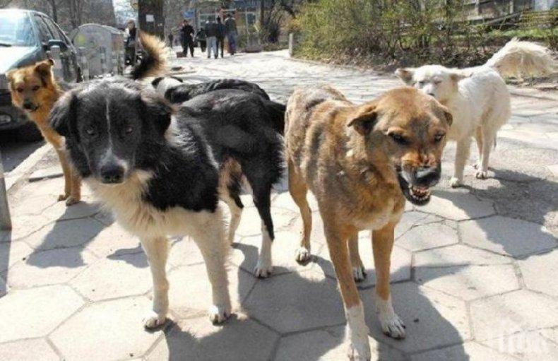 Контролът върху популацията на безстопанствените кучета и котки е от особена важност за община Банско