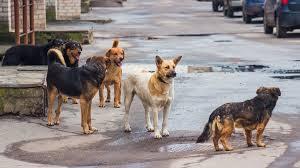 Община Сандански започвакампания за кастрация на бездомни кучета и котки в града и региона
