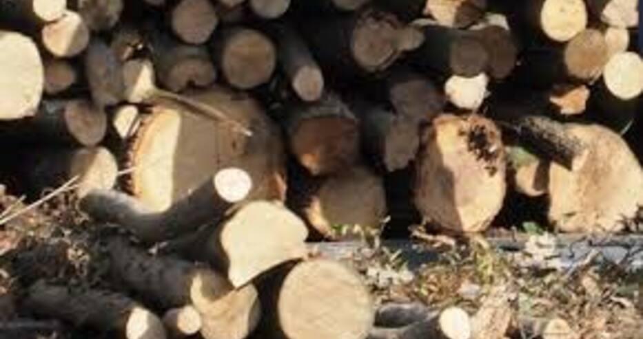 С 10-15 лева по-евтини са дървата за огрев, които се предлагат на борсите в Благоевград
