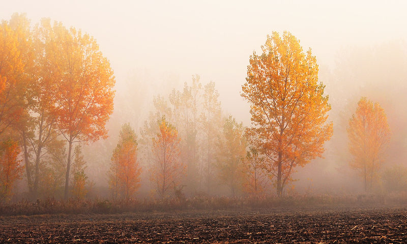 Мъгли в петък на много места. Понижение и на температурите