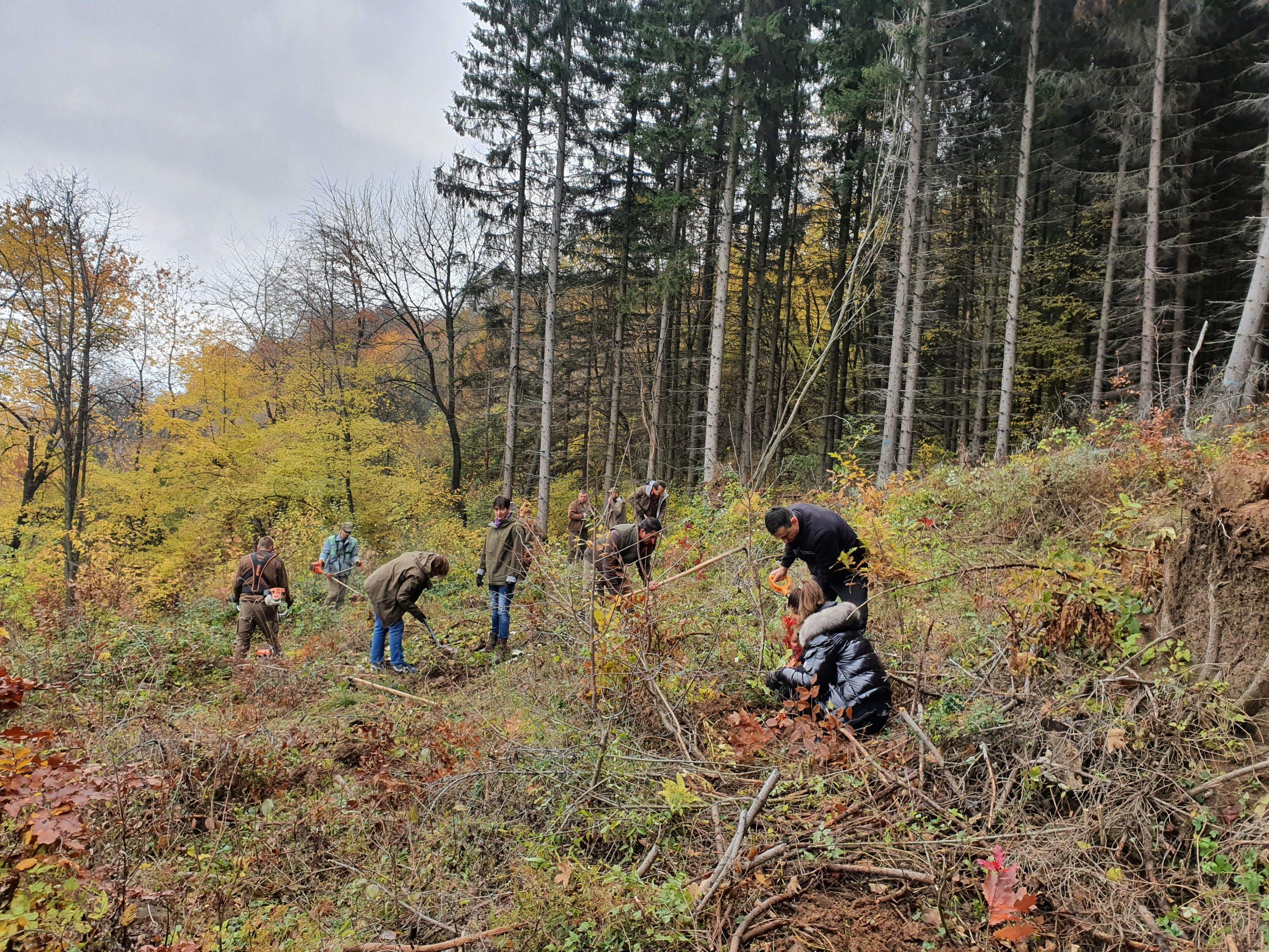 Над 300 фиданки черен бор посадиха млади хора от село Краище