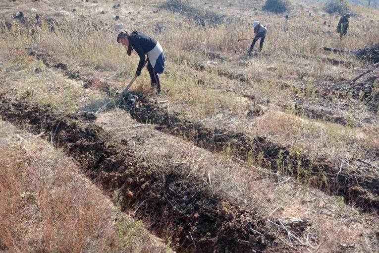 Повече от 4000 декара горски култури ще бъдат залесени до края на годината на територията на Югозападното държавно предприятие