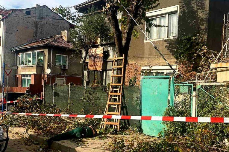 Мъж падна от дърво и загина на място в Благоевград