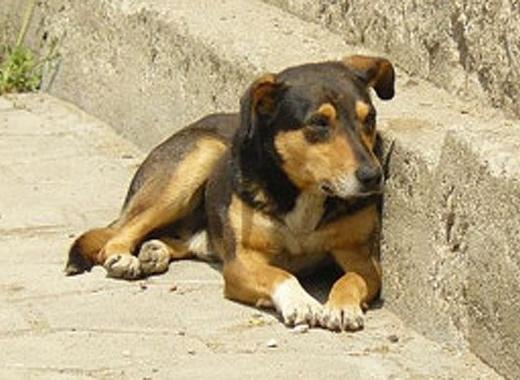 Безплатна кастрация на кучета и котки до неделя в село Баничан