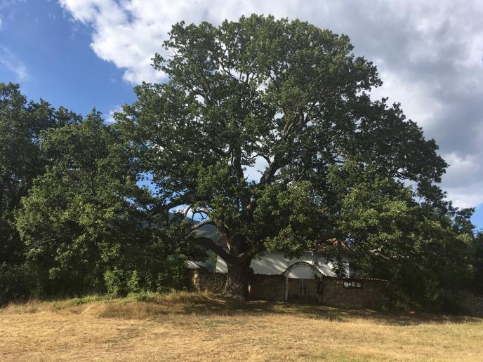 """11-ото издание на конкурс """"Дърво с корен 2020"""" търси историите на любими и впечатляващи дървета"""