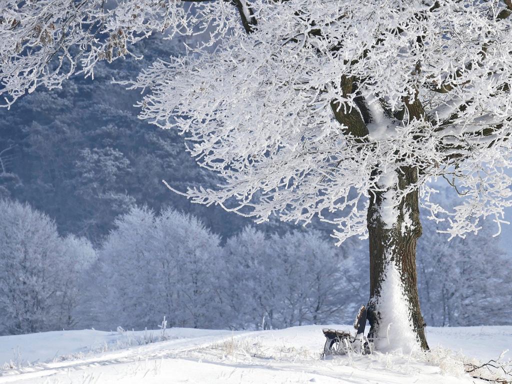 Плавно ще се понижават температурите  максималните стойности ще са 8 градуса
