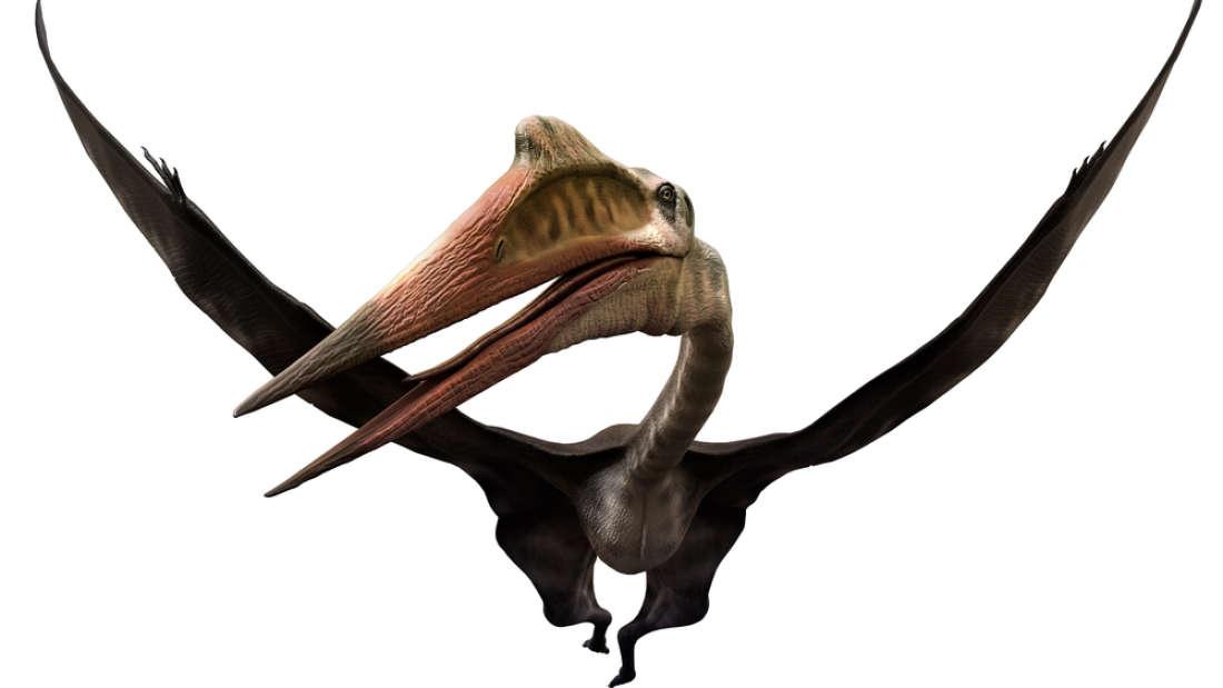 Гигантски птерозавър от времето на динозаврите откриха български учени по време на проучвания в Трънско