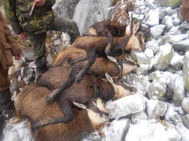 Природозащитник с шокиращи снимки на убити животни от ловци