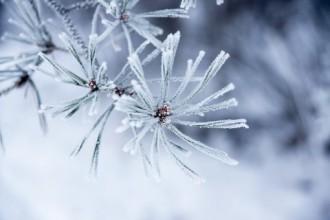 Днес настъпва астрономическата зима