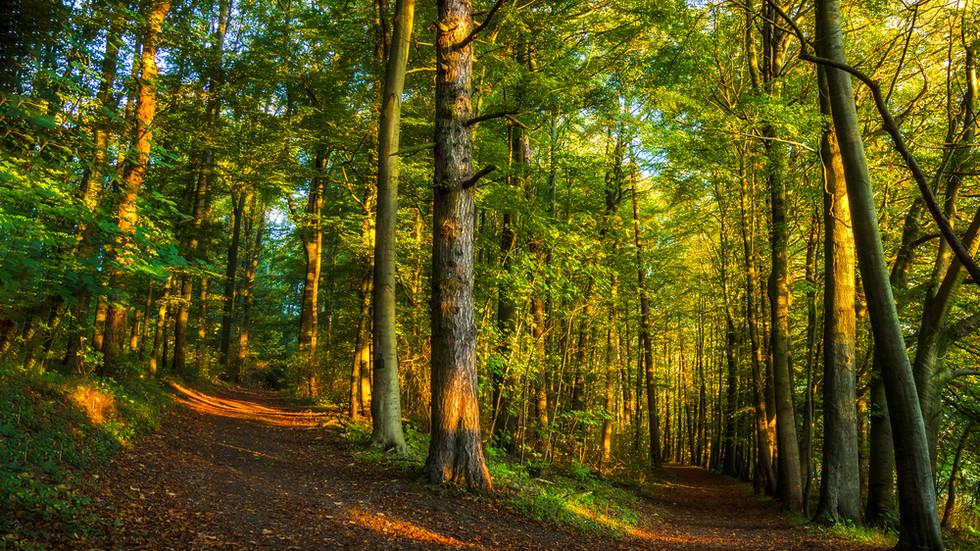 Държавата обявява кампания за закупуване на частни гори