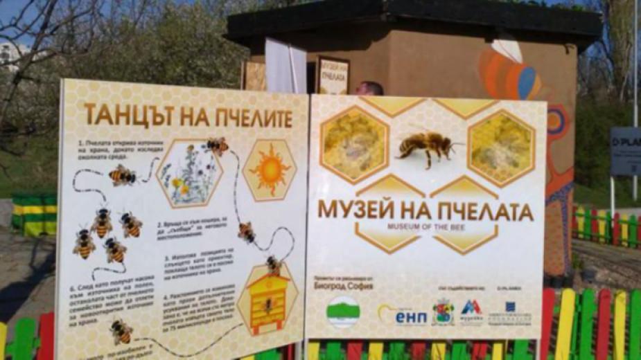 Музеят на пчелата показва живота в едно пчелно семейство