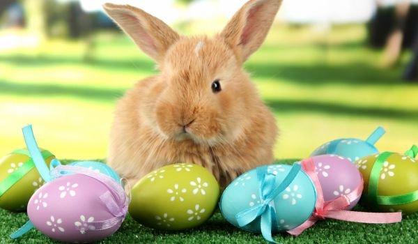 """Нова благотворителна кампания започва в Гоце Делчев и района – """"Великденски заек с мустак"""""""