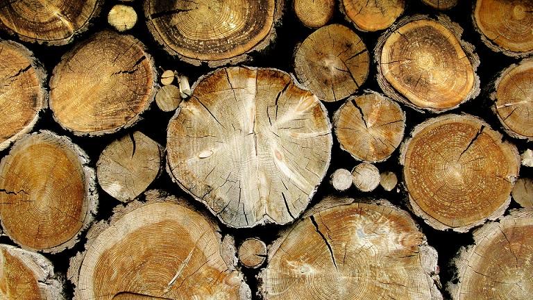 Горски и полицаи задържаха нарушител край Белица с незаконна дървесина