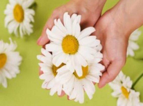 Белите цветя лекуват психиката, жълтите – инфекции