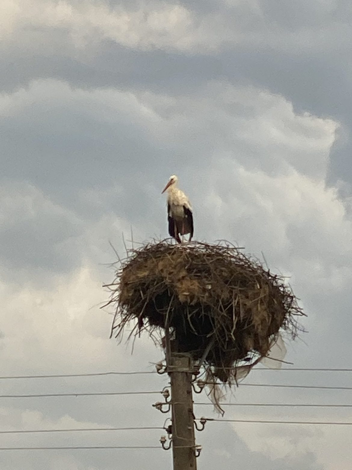 Бурята нанесе поражения на щъркеловото гнездо по пътя Мосомище – Ново Ляски!