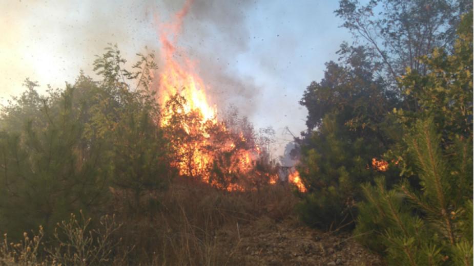 """Вертолет """"Кугар"""" участва в гасенето на горски пожар в Рила"""