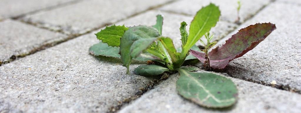Как лесно да се избавим от тази напаст плевелите