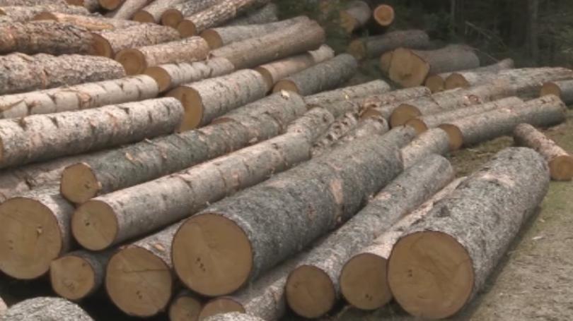 Завода за производство на целулоза в Свищов, спира работа