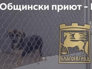 """Общинско предприятие """"Общински приют за безстопанствени животни"""" – Благоевград обявява свободна работна позиция за ветеринарен лекар"""